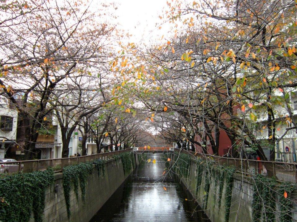 One of My Favorite Tokyo Neighborhoods: Nakameguro